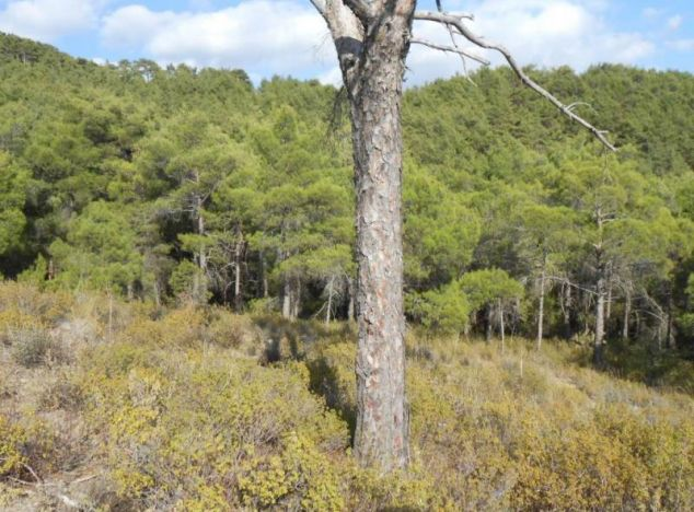 Sell Land 1182 in Troodos