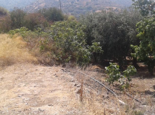 Sell Land 13592 in Paphos
