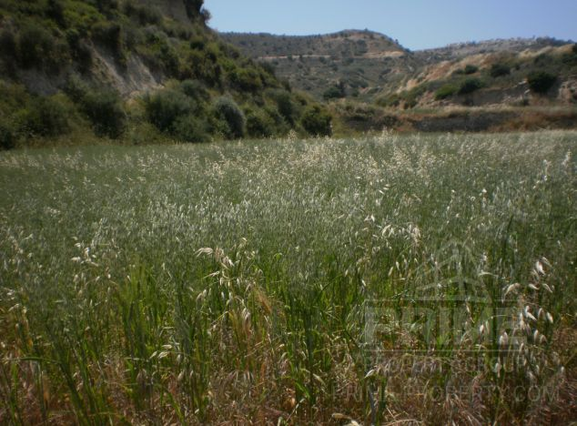 Land 1607 on sell in Pissouri