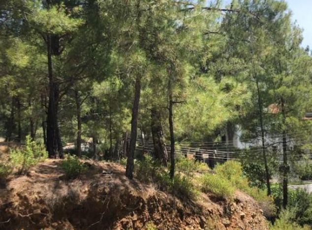 Buy Land 16145 in Troodos