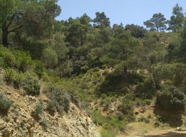 Buy Land 16426 in Troodos