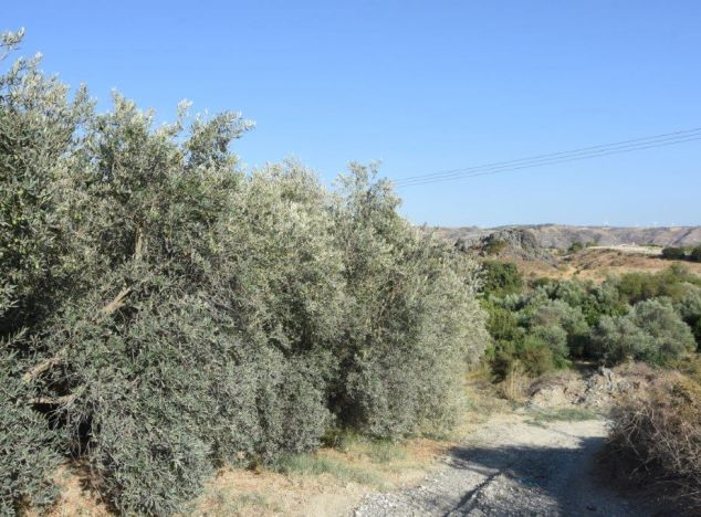 Land 16783 on sell in Paphos