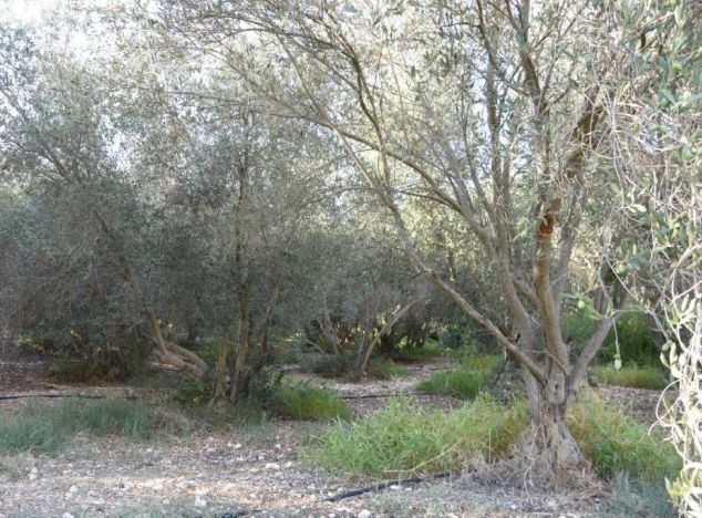 Sell Land 16783 in Paphos