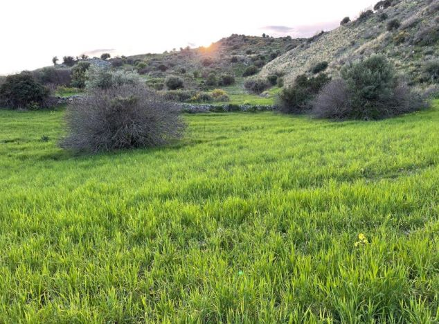 Buy Land 17718 in Paphos