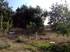 Cyprus property, Land for sale ID:3506
