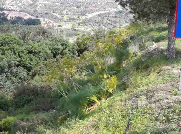 Cyprus property, Land for sale ID:7917