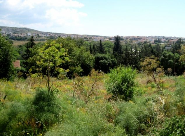 Land 8126 on sell in Paphos