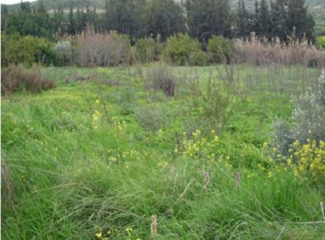 Sell Land 9627 in Pissouri