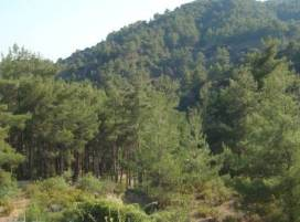 Cyprus property, Land for sale ID:9629